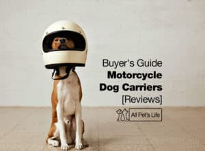 Read more about the article 10 Best Motorcycle Dog Carriers Reviews 2021 [Buyer's Guide]