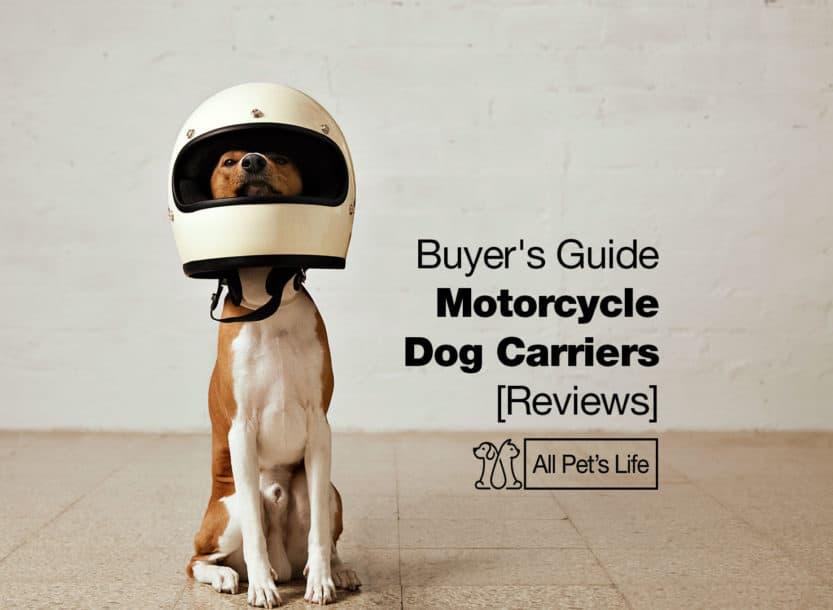 motorcycle dog carriers
