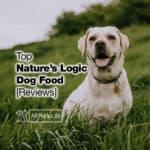 12 Top Nature's Logic Dog Food Reviews [2021]
