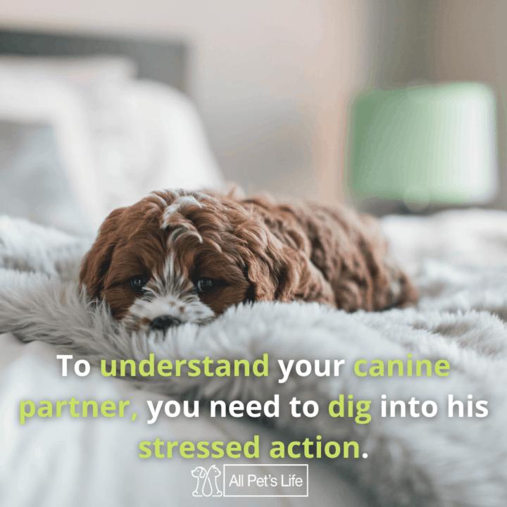 Sad Dog lying on the bed