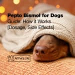 Pepto Bismol for Dogs Guide: How it Works [Dosage and Side Effects]