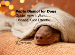 Read more about the article Pepto Bismol for Dogs Guide: How it Works [Dosage and Side Effects]