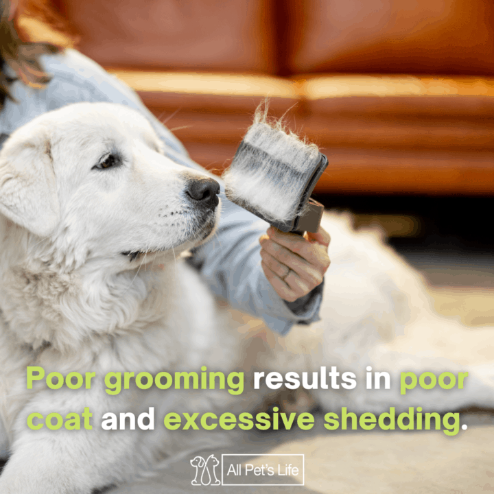 dog shedding, dog brush for short hair