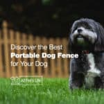 12* Discover the Best Portable Dog Fence of 2021 [Reviews]