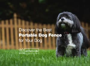 Read more about the article 12* Discover the Best Portable Dog Fence of 2021 [Reviews]