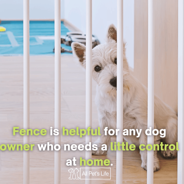 dog inside the Portable Dog Fence