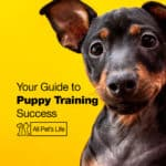 Your Helpful Guide To Puppy Training Success [2021]