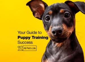 Read more about the article Your Helpful Guide To Puppy Training Success [2021]