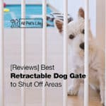12 Best Retractable Dog Gate to Shut Off Areas 2021 [Reviews]