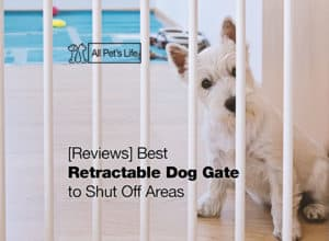 Read more about the article 12 Best Retractable Dog Gate to Shut Off Areas 2021 [Reviews]