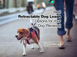 Read more about the article 12 Best Retractable Dog Leash Options for Your Dog [2021 Reviews]