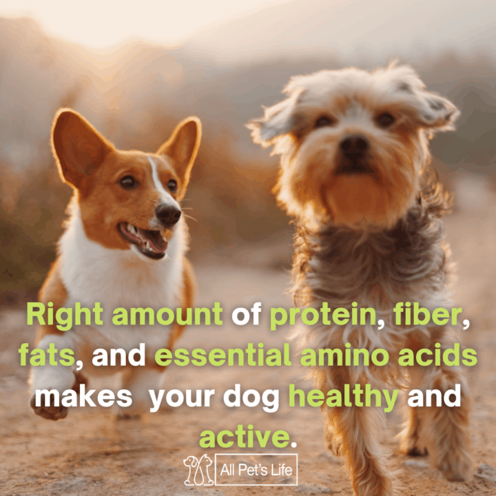 right amount of protein fiber fats and essential amino acids makes your dog healthy and active