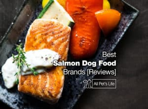 Read more about the article 12 Best Salmon Dog Food Brands [2021 REVIEWS]
