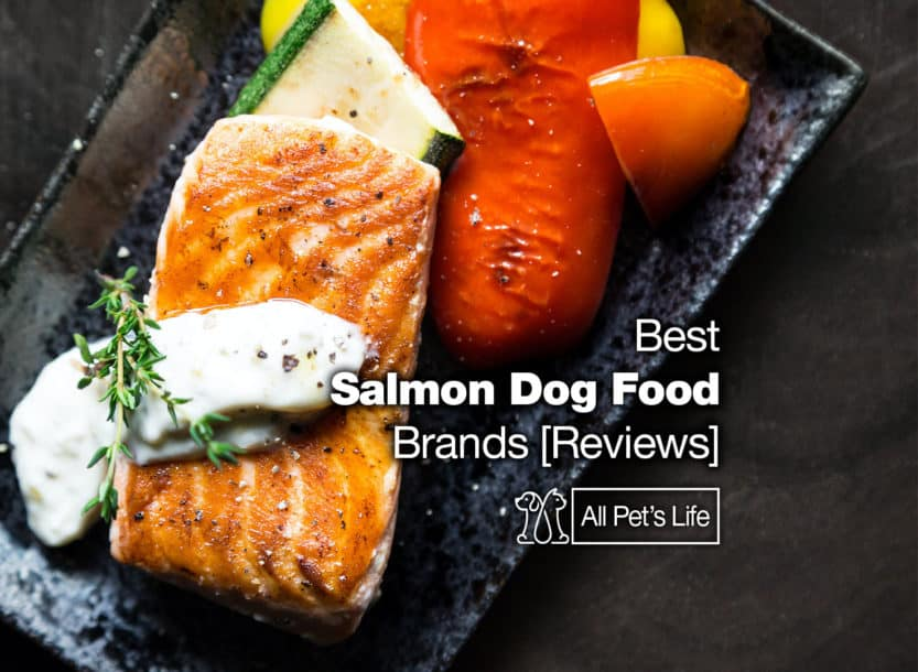 salmon dog food brands