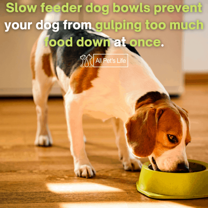 Dog eating from a slow feeder dog bowl