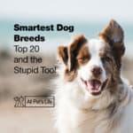 Smartest Dog Breeds: Top 20 + the Stupid Too! [2 Infographics]