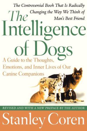 smartest dog breeds intelligence of dogs