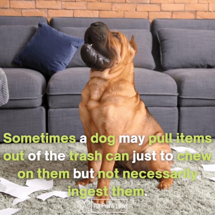 Dog Proof Trash Can. dog scattering tissue