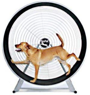 dog on starsun depot gopet treadwheel for large dogs