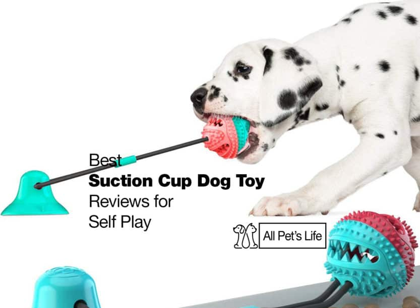 suction cup dog toy with ball