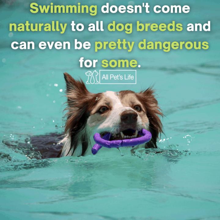 dog playing on the pool