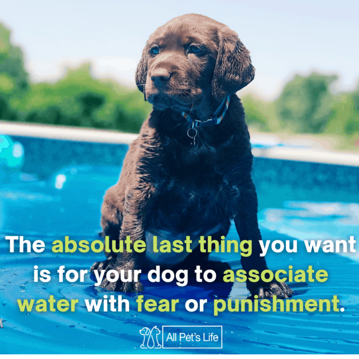 dog seating on the pool