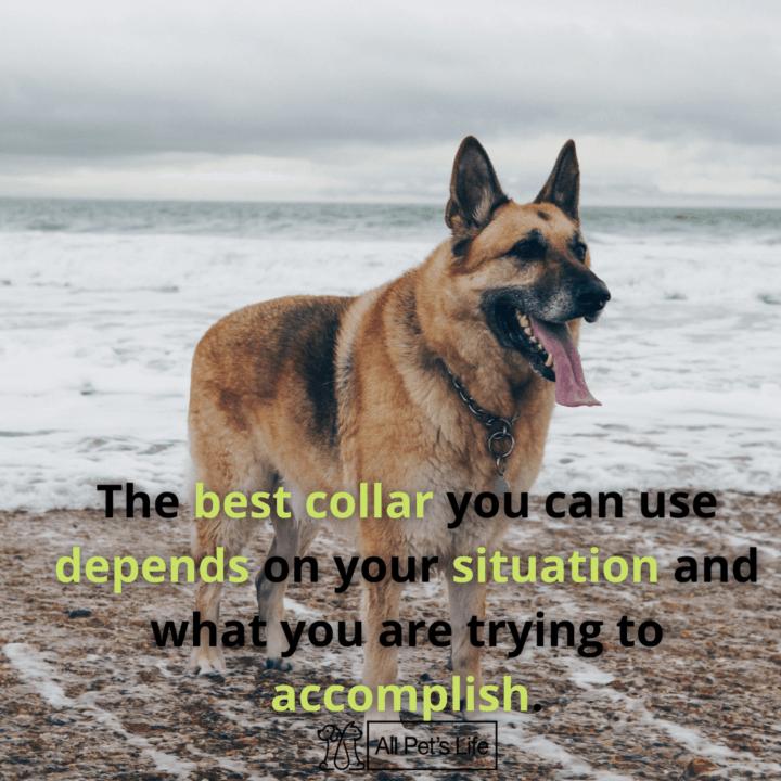 dog on the beach with a dog chain