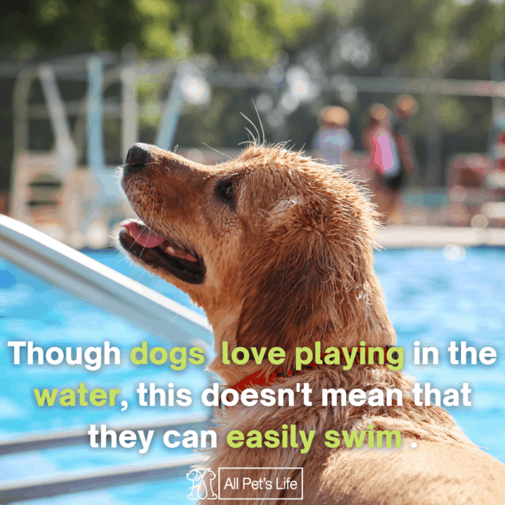 dog pool ramps