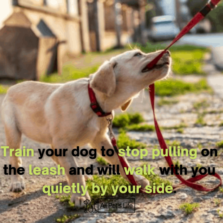 Dog trying to pull the leash