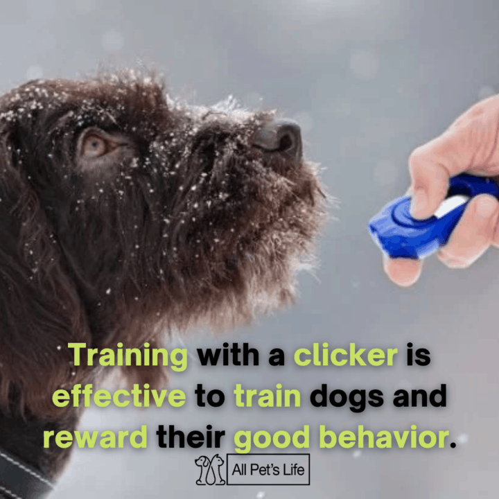 dog training using a clicker