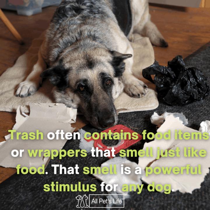 Dog Proof Trash Can, scattered the trash