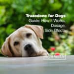 Trazodone for Dogs Guide: How it Works [Dosage & Side Effects]