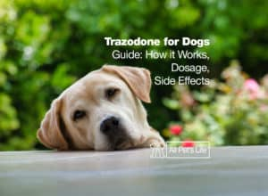 Read more about the article Trazodone for Dogs Guide: How it Works [Dosage & Side Effects]