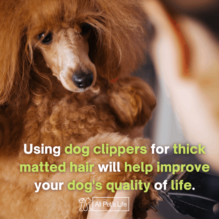 best dog clippers for matted hair groomed