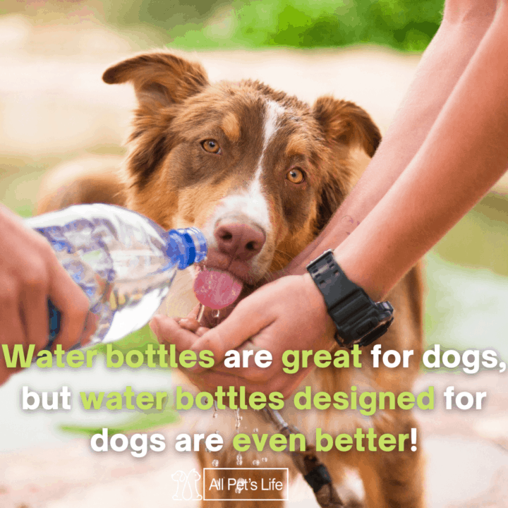 Dog drinking in water bottle