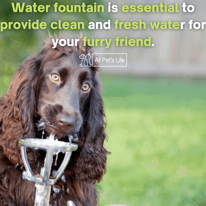 dog drinking in a water fountain