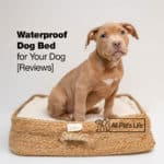 12 Waterproof Dog Bed Options for Your Dog [2021 Reviews]