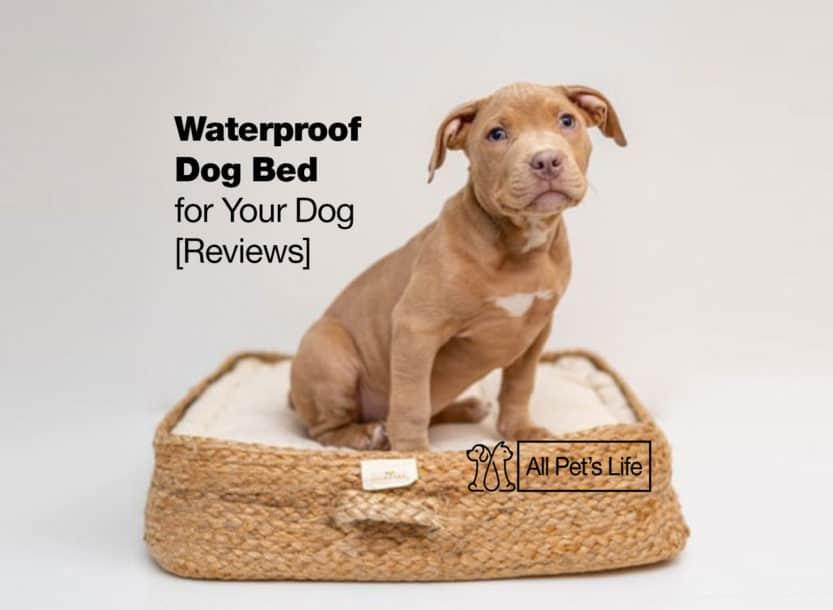 waterproof dog bed reviews