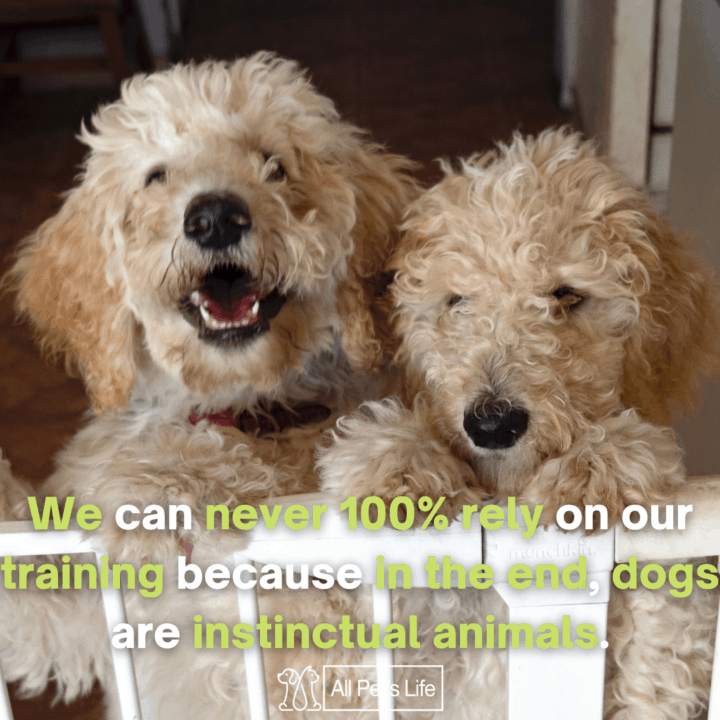 two dogs standing inside the Retractable Dog Gate