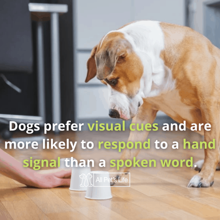 Smartest Dog Breeds teaching dog to play cups