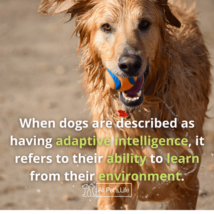 Smartest Dog Breeds dog with a ball