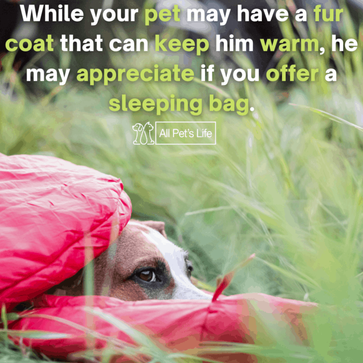 dog inside a dog sleeping bag