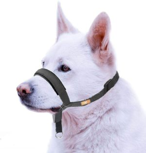wintchuk dog head collar with padded leather head harness stops dog pulling head leash