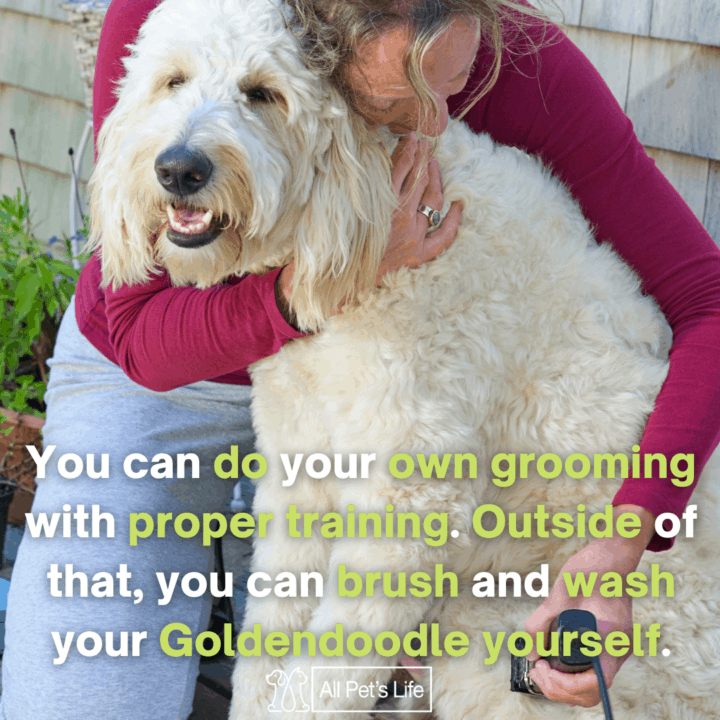 best clippers for Goldendoodles, a haircut by its owner