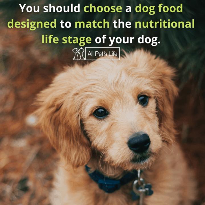 best dog food for Goldendoodles, sitting