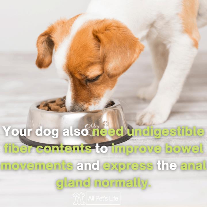 dog eating dog food with fiber