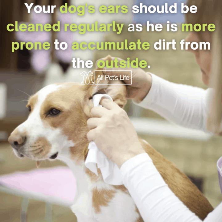 human wiping dog's ear using dog wipes